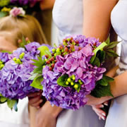 A bouquet of purple Hydrangeas and berries, hand-tied