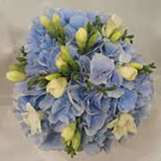 A bouquet of white Freesia and blue Hydrangea